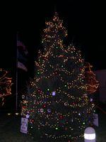 Florence_Christmas_Tree
